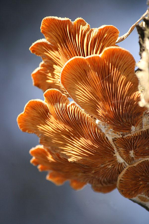 sienet-pokkelolla1